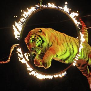 Цирки Александровской