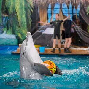 Дельфинарии, океанариумы Александровской