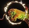 Цирки в Александровской