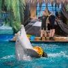 Дельфинарии, океанариумы в Александровской